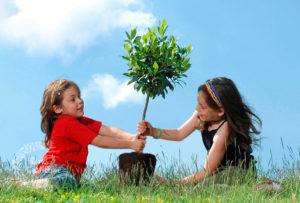 plantando árboles con composta compost-on