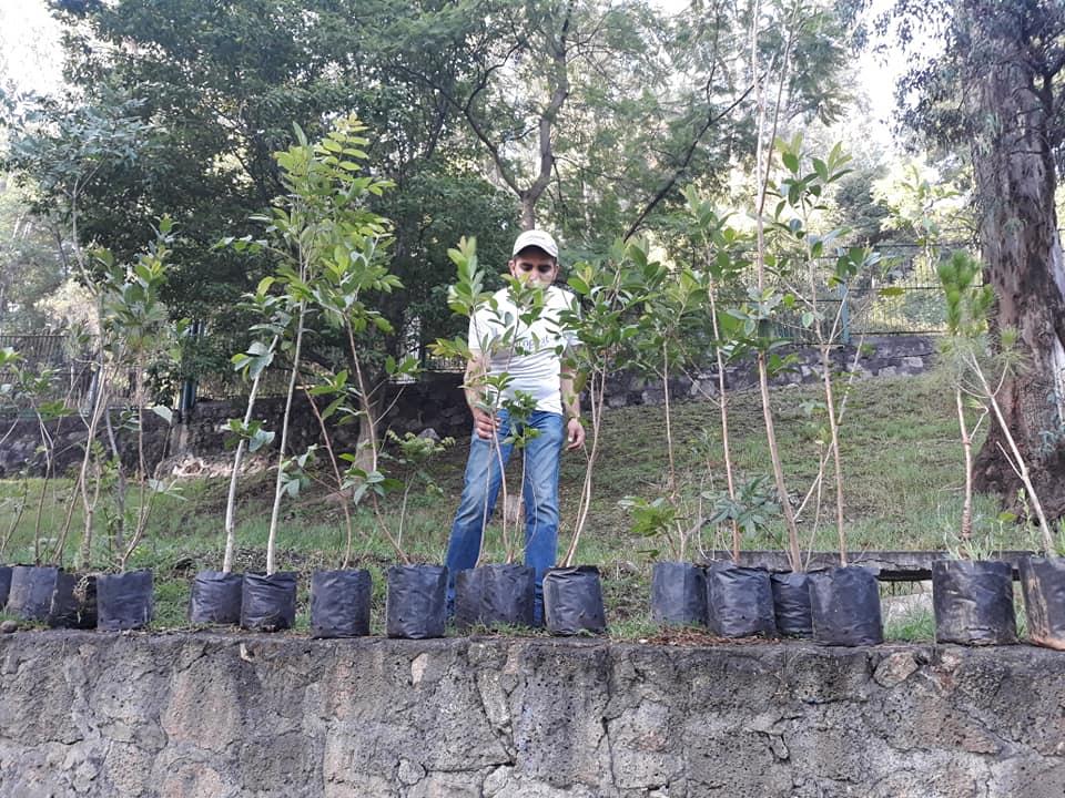 Reforestación compost-on méxico