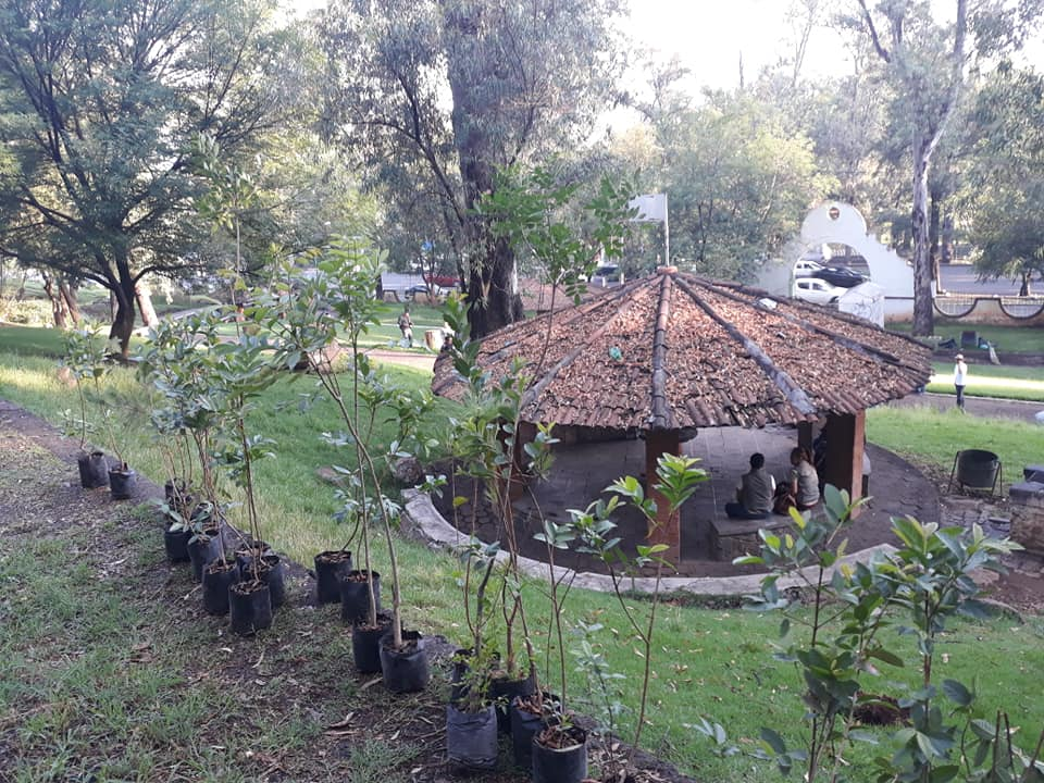Reforestación michoacán compost-on