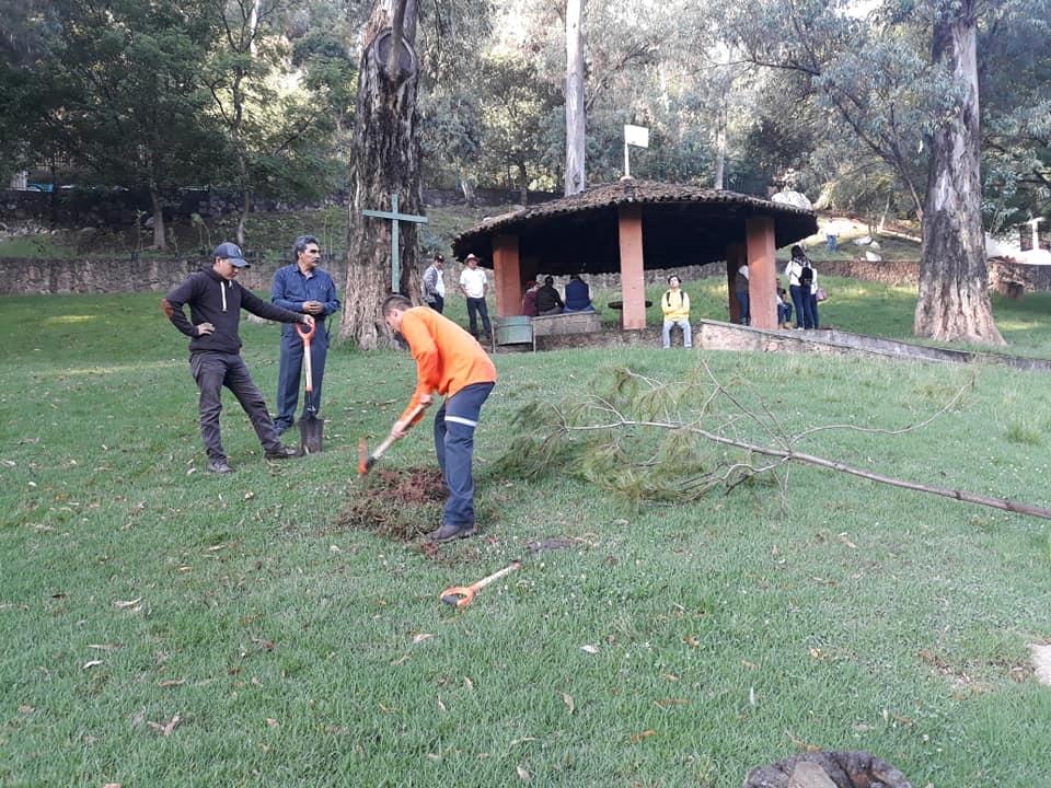 reforestación los cenadores morelia